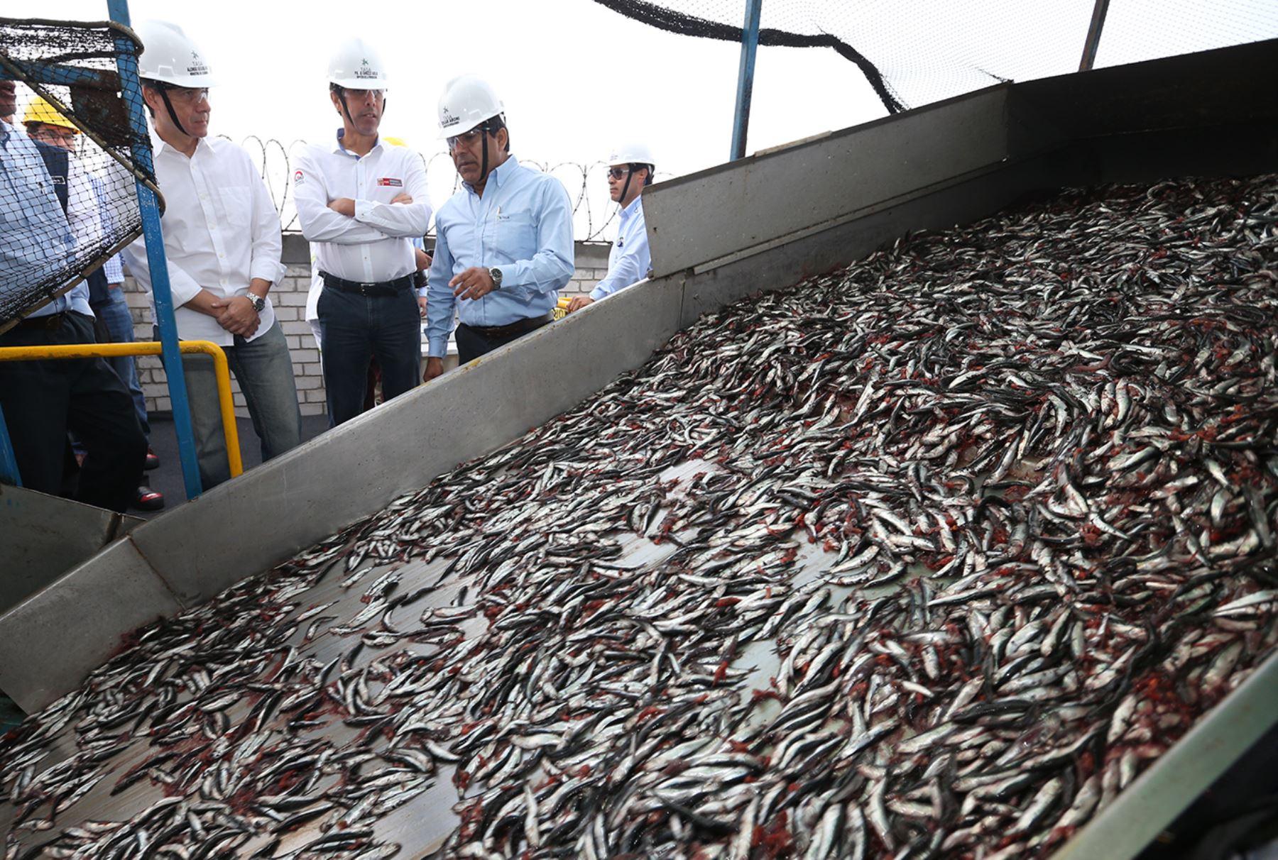 Pesca de anchoveta un reporte a medida de la industria for Ministerio de pesqueria